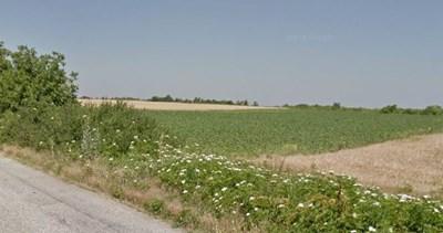 ниви край село Горни Цибър в община Вълчедръм Снимка: Google street view