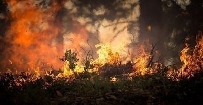 Две вили изгорели при пожара край Реброво, огънят се разраства