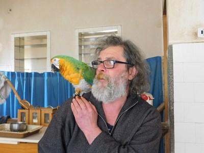 Вместо какаду Огнян Геров нарича рокаду папагалите, които са се излюпили в Родопите.