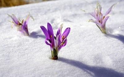 В планинските райони и по високите полета в петък ще вали сняг.
