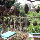 Потреблението на мед в Индонезия е около 20 000 тона годишно. Това означава, че около 70% от нуждите му от този продукт се задоволяват от Индонезия чрез внос. Медът се внася предимно от Китай, други страни от Азия и Австралия.