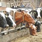 Всички животни ядат с апетит доброкачествения силаж.