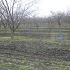 През първата половина на февруари все още дърветата около Карнобат, а и в останалите райони на страната, са в естествен покой