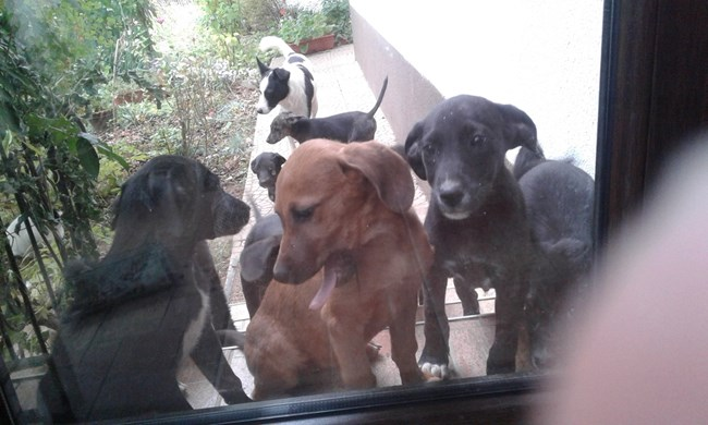 Нешка Робева отглежда 14 кученца