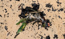 Биологичен Aрмагедон: Животните в Австралия изчезват като динозаврите (Снимки)