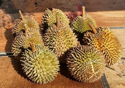 Плодовете дуриан се раждат от тропически дървета, които са разпространени в Югоизточна Азия. СНИМКА: Pixabay