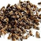 В резултат на смущенията много пчели се откъсват от кълбото, попадат на по-ниска температура и загиват. Това води до повишаване на зимната смъртност!