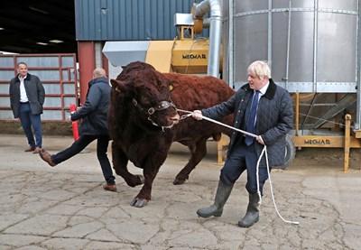 Британският премиер Борис Джонсън посети ферма в Шотландия по време на предизборната си кампания. СНИМКА: РОЙТЕРС