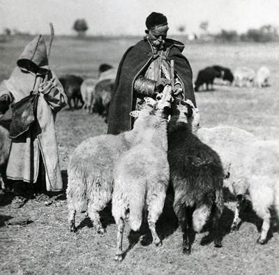 """""""Камък падна от небето"""" е класика за нашите овчари"""