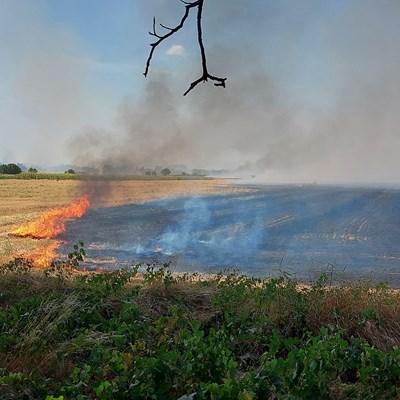 Пламъците са върху голяма площ Сн. Йорданка Гологанова