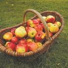 Късна беритба на плодове