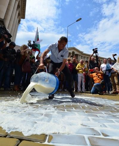 Протестиращи  изливат мляко по жълтите павета. Снимки ЙОРДАН СИМЕОНОВ