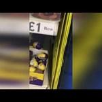Гълъб мъти шоколадови яйца в супермаркет (Видео)