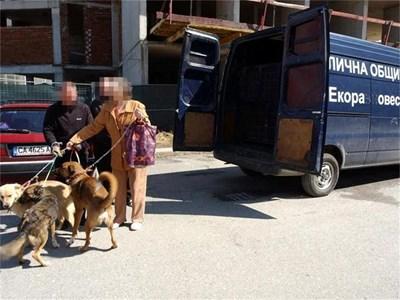 """Екип на """"Екоравновесие"""" върна три кучета в """"Дружба 2"""", след като те са били кастрирани. СНИМКИ: ГЕРГАНА ВУТОВА И """"24 ЧАСА"""""""