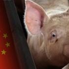 Заради АЧС - антирекорд по производство на свинско месо в Китай