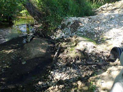 Умряла риба в река Кошовица вдигна на крак институтициите