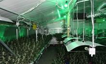 Оранжерия за марихуана, прикрита с копачки за биткойни разкриха край Пазарджик