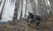 След 50 г. пак ще има гора на изгорелите 20 хил. дка в Пирин, след 20 г. - костенурки