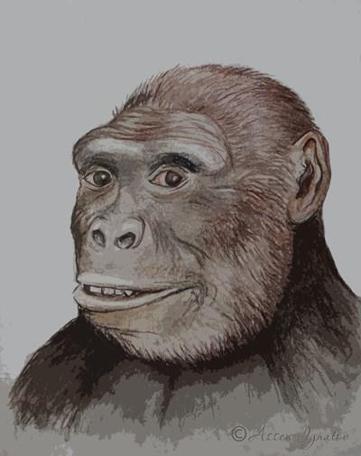 Възстановката на лицето на грекопитека – рисунка от Асен Игнатов, Национален природонаучен музей – БАН.