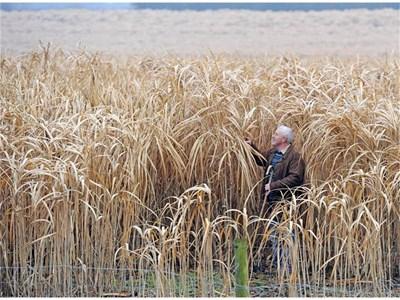 Слонската трева е суровина за биогориво. Първите насаждения у нас са на банкерката Цветелина Бориславова.  СНИМКА: РОЙТЕРС