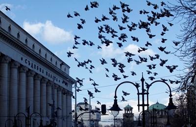 Само дежурните магистрати и служебни служители влизат в Съдебната палата в София  СНИМКА: Йордан Симeонов