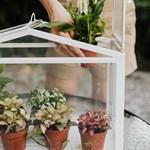 7 стайни растения, с които ще спите като къпани