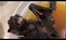 Жителите на Ухан ядат супа от прилепи. Коронавирусът дошъл от летящите мишки? (Видео)