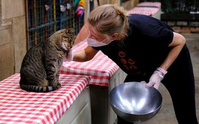 Протеинът от буболечки е подходящ за котки с чувствителен стомах.   СНИМКА: РОЙТЕРС