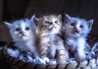 Малки котенца  СНИМКА: Пиксабей