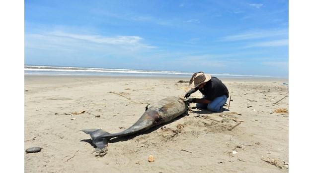 Газ от морето убива хора и животни
