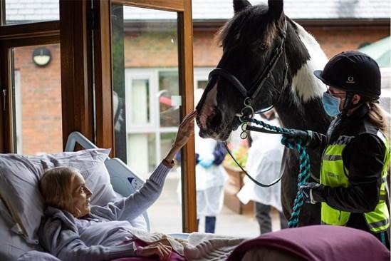 Ян се сбогува с коня си. Снимки: Hospice of the Good Shepherd
