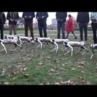 Студенти тестват кучета роботи