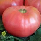 Розовите гиганти връщатстария вкус на доматите