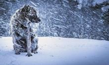 БЪЛГАРСКАТА ЗИМА е адска зима. Тук всеки сезон е мъчение за народа и повод за драми