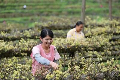 Китай ще отдели $3 млрд. в подкрепа на земеделците, за да се справят с нарастващите цени на производствените материали