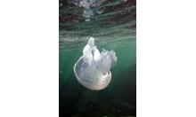 Да чакаме ли повече водорасли и медузи на плажа