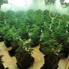 Свръхмодерна наркоферма в бивш имот на Баневи бълва дрога за милиони