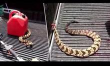 Змия без глава продължава да напада