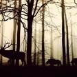Повече от 500 вида гръбначни животни са на границата на измиране