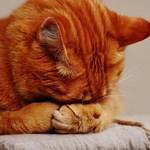 Защо котките спят по 16 часа на ден?