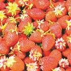 Координираната програма на EUCP обхваща подобни кошници с храни с тригодишна ротация, което означава, че могат да бъдат идентифицирани тенденции към възходящ или низходящ характер за конкретни продукти.