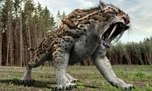 Саблезъбият тигър всявал ужас у нас преди 7,5 млн. години