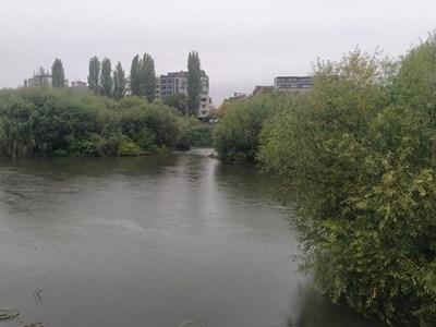 Водата до Пешеходния мост едва си проправя път през буйната растителност. Снимки: Радко Паунов