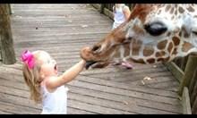 Деца срещу животни