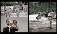 Симфоничен оркестър озвучава животни от зоопарк