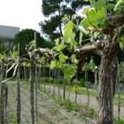 От началото на вегетацията да се прегледат вички части на растенията