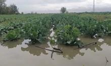 Иде още по-голяма скъпотия - дъждовете в Пловдивско довършиха реколтата (снимки)
