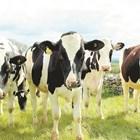 Поддържането на земята е от решаващо значение за рентабилността на една ферма. Пасищата и площите за отглеждане на култури за подхранване на стадото са важни елементи от управлението на фермата.