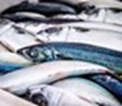 Институциите търсят кой е замърсил река Марица и е отровил рибата