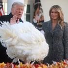 Доналд Тръмп помилва пуйка за деня на благодарността